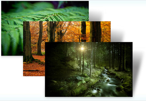 Forests theme